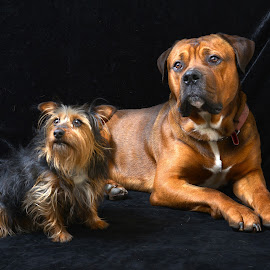 Friends by Philip Watts - Animals - Dogs Portraits ( dogs )