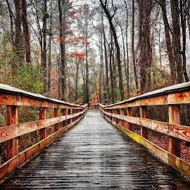 Wet by Lou Plummer - City,  Street & Park  City Parks (  )
