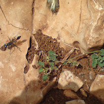 Hymenoptera of the world -- bees, ants and all their friends