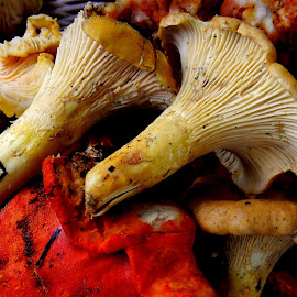 The hunter only found shantrelles and lobster mushrooms yesterday evening. by Liz Hahn - Food & Drink Ingredients