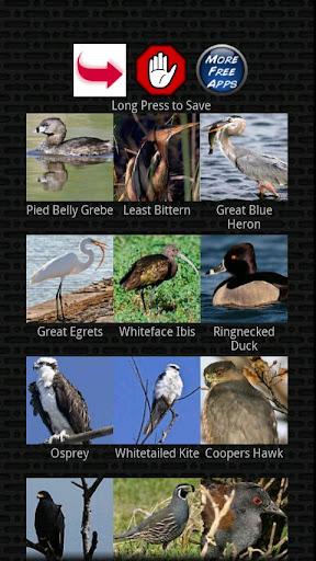 古典的な鳥の鳴き声