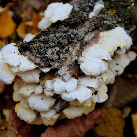 by Jazz Johnson - Nature Up Close Mushrooms & Fungi