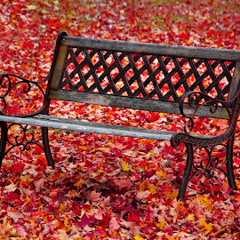 Autumn Bench by GPictoria -Gopu's Photography - City,  Street & Park  City Parks ( becnh, nature, color, fall, autumn bench, colorful )