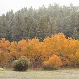Sedalia Meadow by Hannah Maison - Landscapes Prairies, Meadows & Fields ( fall, meadow, trees, sedalia,  )