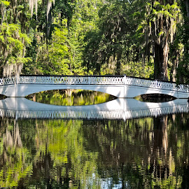 Long White Bridge by Eve Spring - Buildings & Architecture Bridges & Suspended Structures ( water, reflection, moss, trees, sc, swamp, long white bridge,  )
