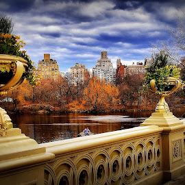 Bridge  by Jose Figueiredo - City,  Street & Park  City Parks ( park, bridge, new york,  )