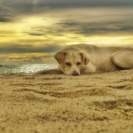 bum by Mark kristoffer Absulio - Instagram & Mobile Android ( mobilography, xperia, dogs, mobile photos, beach, #GARYFONGPETS, #SHOWUSYOURPETS )