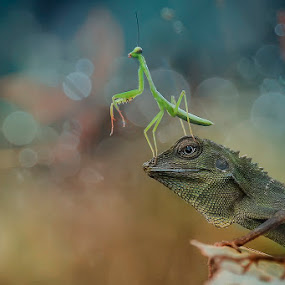my action by Alonk's Roby - Animals Reptiles
