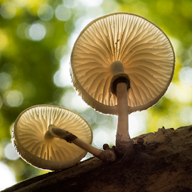 On the other side by Peter Samuelsson - Nature Up Close Mushrooms & Fungi