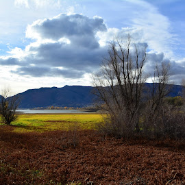Pineview by John Dodson - Landscapes Prairies, Meadows & Fields