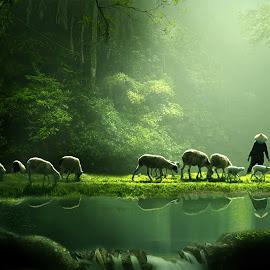 morning spirit by Herry Vaeezal - Animals Other Mammals ( water, reflection, green, lake, forest, landscape, morning, shepherd, nature, jungle, fog, backlight, asia, trees, sheep, light, man, misty )