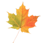 Autumn Leaves Donate LWP icon