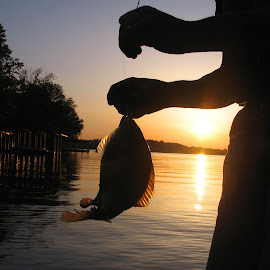 Nice Crappie by Kaye Petersen - Sports & Fitness Other Sports ( silhouette, fish, sunset, catch, lake, fishing, release )
