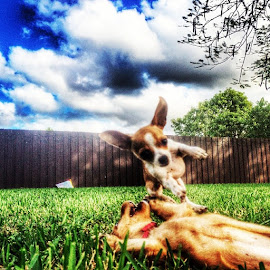 silly dogs 2 by Nicolas Donadio - Animals - Dogs Puppies