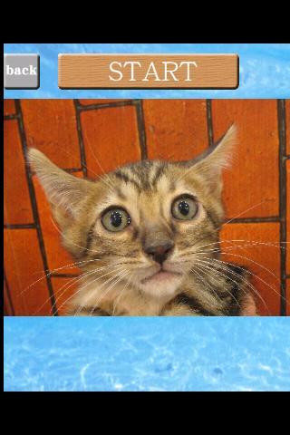 puzzle{Cat}