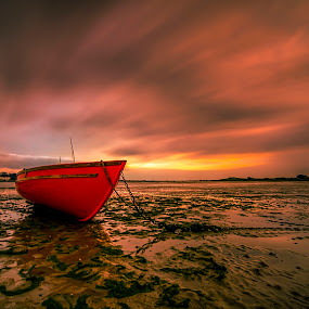Bull Island by Alnor Prieto - Landscapes Sunsets & Sunrises