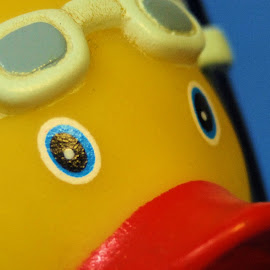 Ducky by Glenda Koehler - Novices Only Objects & Still Life