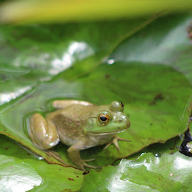 by Sarah Thomas - Animals Amphibians ( september 19th - gardens and zoo )