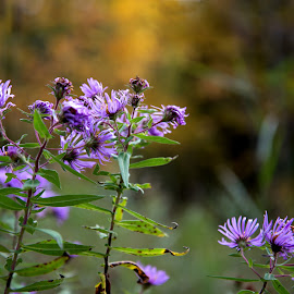 by Deborah Crawford - Nature Up Close Trees & Bushes