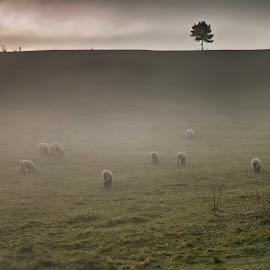 by Brian Lee - Landscapes Prairies, Meadows & Fields