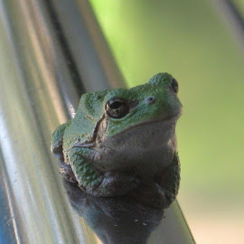 Jay Anderson should I submit this pic ? lol by Paul Johnson - Animals Amphibians