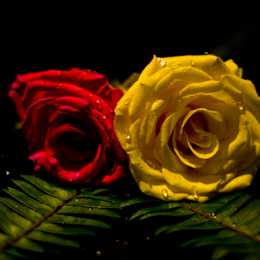 Friends and Love by Dibyendu Banik - Novices Only Flowers & Plants ( love, rose, friends, nature up close, objects )