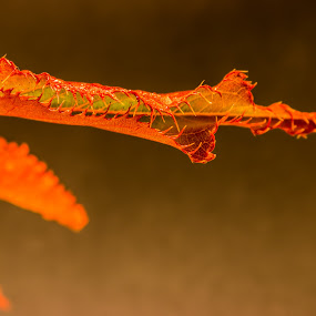 Autumn leaves. by Robert Stanley - Nature Up Close Leaves & Grasses (  )