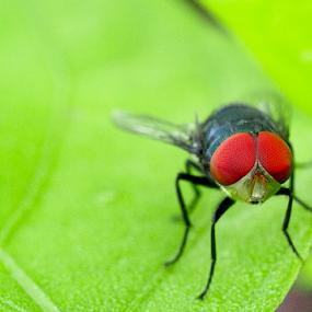 Hello by Fathya Zainuri - Animals Insects & Spiders ( animals, insects, insect, animal )