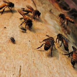 near a bee hive  by Amit Ghosh - Novices Only Macro