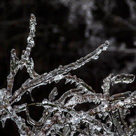 Frozen branch by Lucijan Španić - Nature Up Close Trees & Bushes ( icewater, ice storm, nature, tree, bushes, national geographic, ice, nature up close, natural )