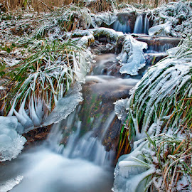 by Siniša Almaši - Nature Up Close Water ( water, up close, stream, winter, nature, grass, waterfall )