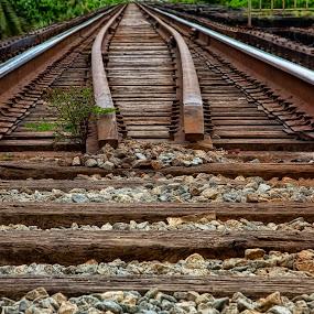 by Nancie Rowan - Transportation Railway Tracks