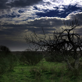 Dark day by Gil Reis - Landscapes Prairies, Meadows & Fields ( clouds, sky, bio, nature, trees, portugal, fields )