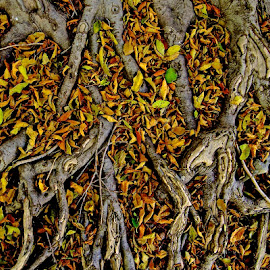 Leaves at Your Feet by Vern Tunnell - Nature Up Close Leaves & Grasses