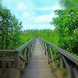 by Herman Bagus - Instagram & Mobile Instagram ( mangrove, trenggalek, jawa, timur, indah, fotonesia, fotonesia, beautiful, nice )