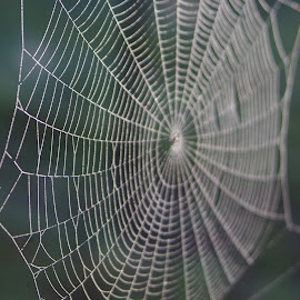 by Kris Pate - Nature Up Close Webs