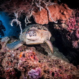 there you are by Catalin Ienci - Animals Sea Creatures ( reef, underwater, reefscape, sea, ocean, turtle )