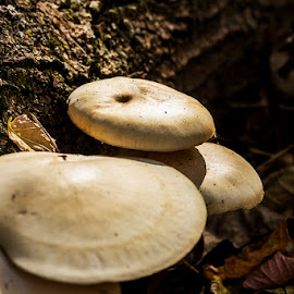 Mushroom by Shawn Oneill - Nature Up Close Mushrooms & Fungi ( mushroom, fungi, forest )
