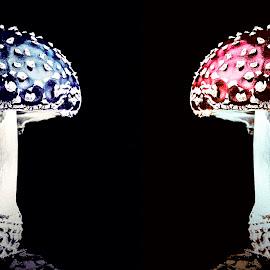by Adrian Rusu - Nature Up Close Mushrooms & Fungi (  )