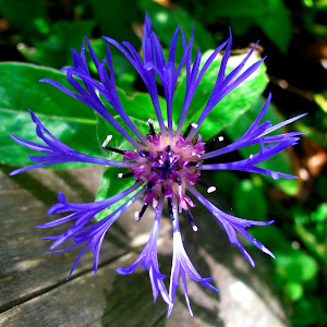 Blue starburst.jpg