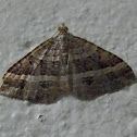Straight-lined carpet -female