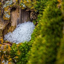 ice ice baby by Andrew Jouffray - Nature Up Close Mushrooms & Fungi