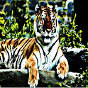 Tiger - Sound Effects icon