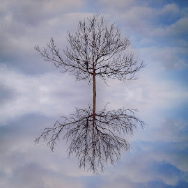 by Ksenija Glavak - Nature Up Close Trees & Bushes