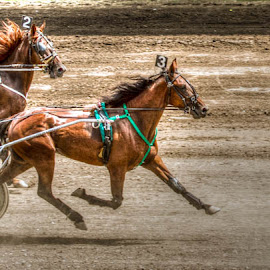 In the Lead by Jeannie Meyer - Animals Horses ( harness races, iowa, horse, jones county iowa, horse races, county fair,  )