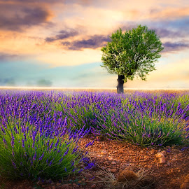Sunset in Provence by Tomas Vocelka - Digital Art Places ( provence, aroma, sunset, digital art, france )