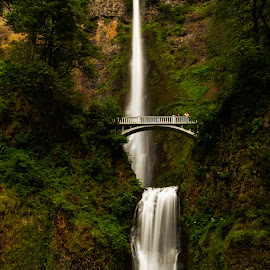 Mulltnomah Falls by Sandra Maldonado - Landscapes Mountains & Hills ( washington, oregon, falls, waterfall, mulltnomah falls )