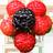복분자한울농장 icon