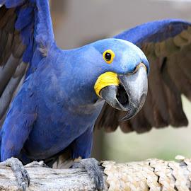 by Sandra Hubbell - Animals Birds