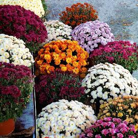 Flowers shop by Meglena Georgieva - City,  Street & Park  Markets & Shops ( market, shops, colors, street, flowers )